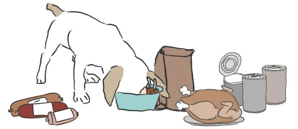 hond-voeding2