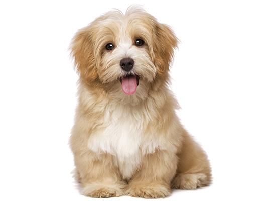 honden-3