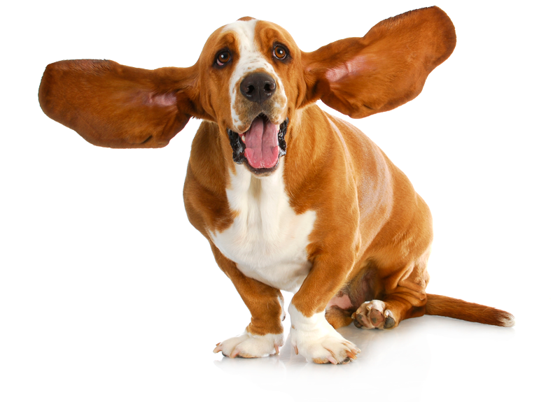 honden1
