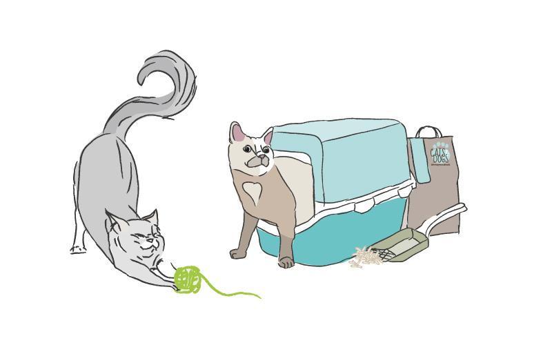 katten4