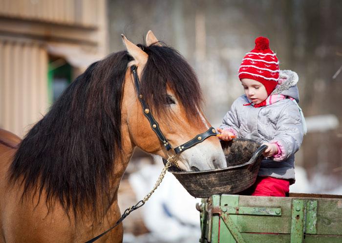paard-eten