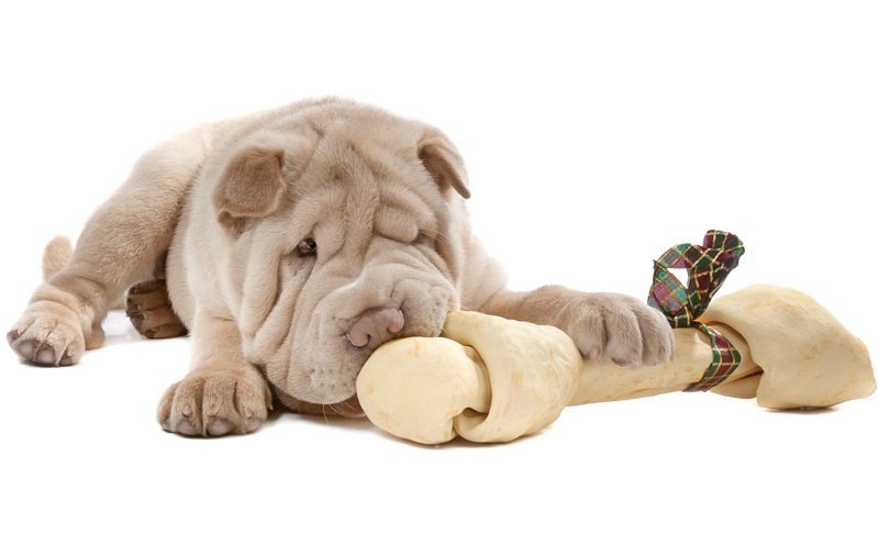 tandverzorging-pup