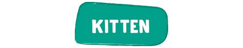 f_categorie_kitten